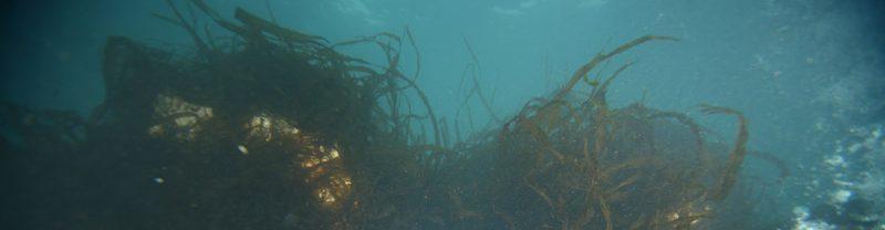 MOBA.WS 藻場再生プロジェクト